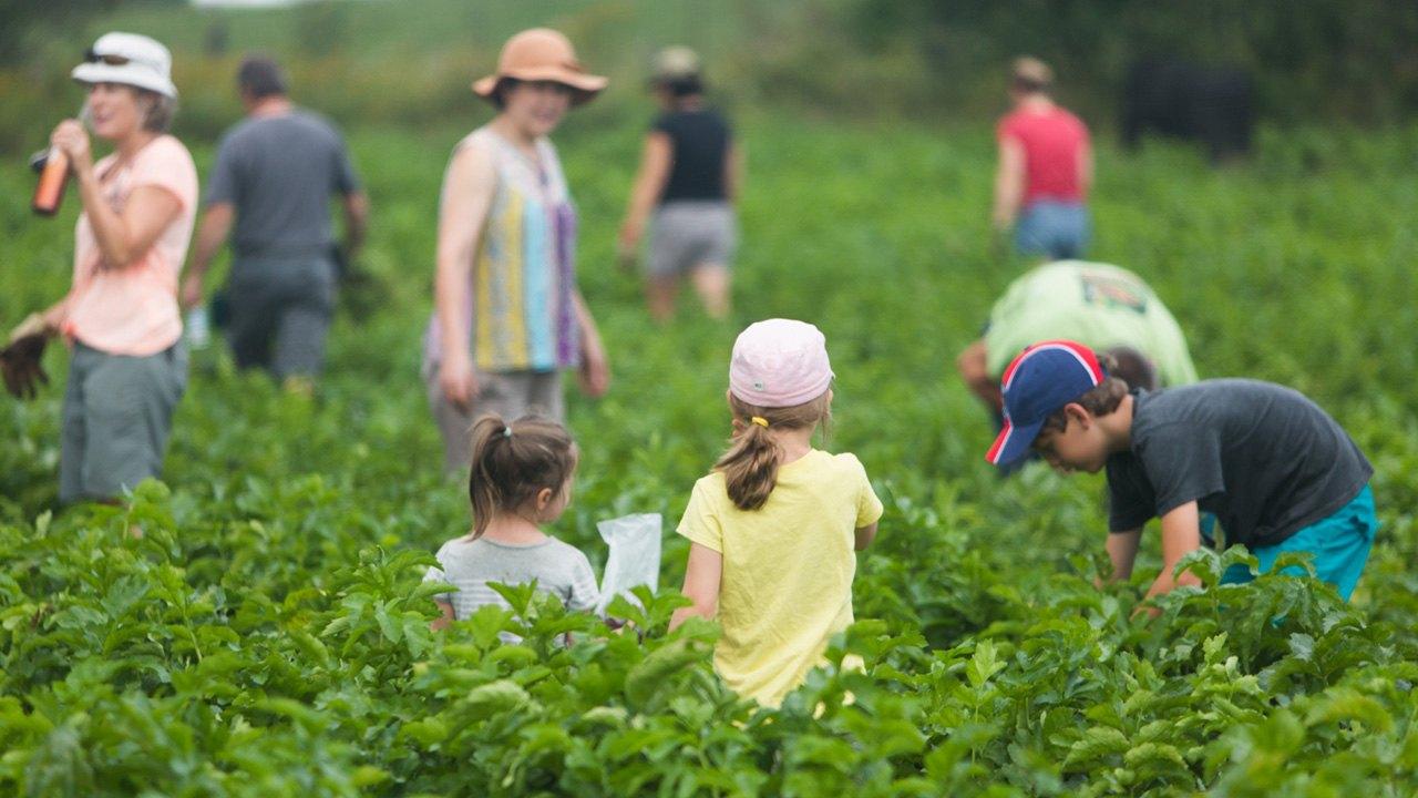 La Coopérative pour l'agriculture de proximité écologique: pour et par ses membres