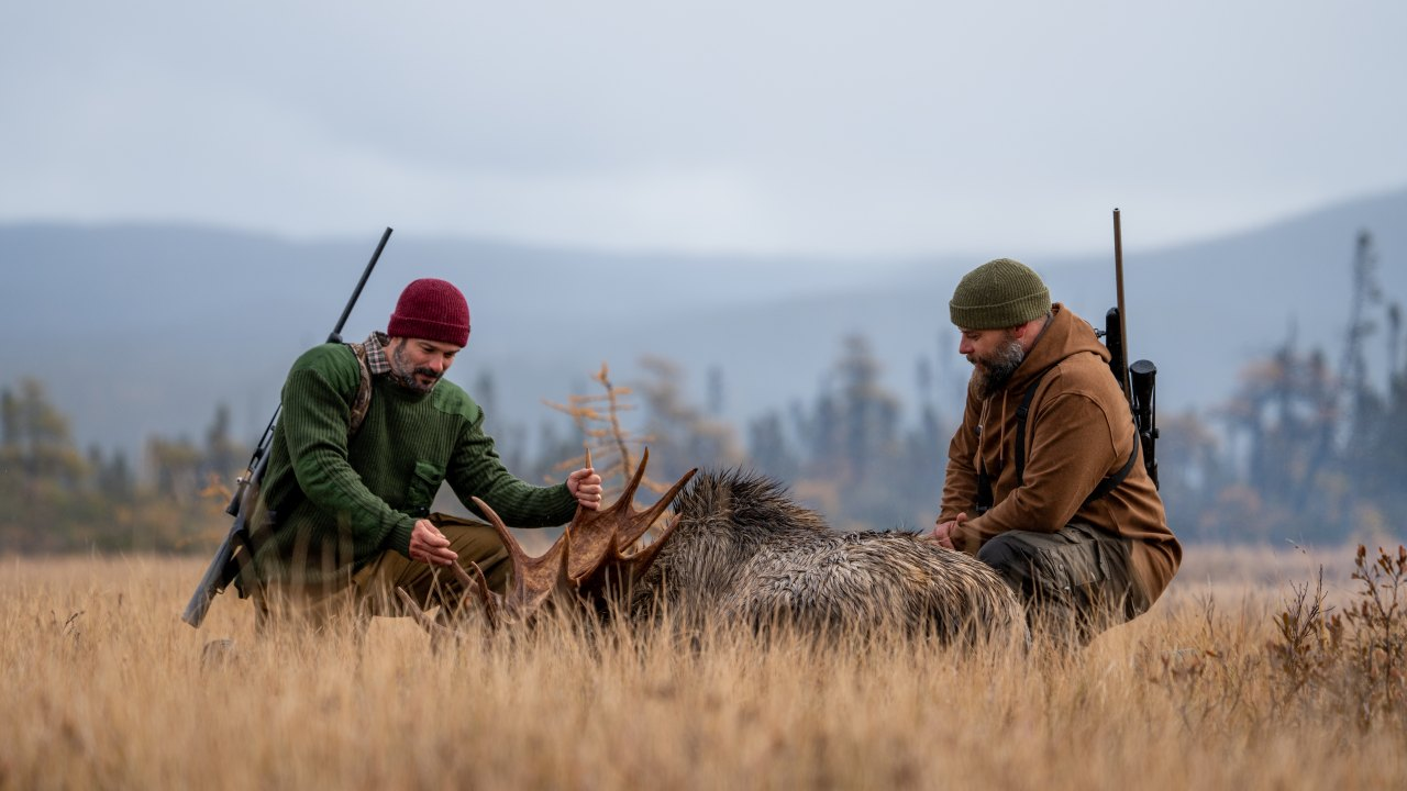 Hooké à la chasse